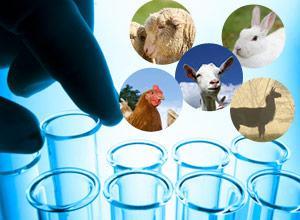 goat antibodies, sheep antibodies, rabbit antibodies, llama antibodies